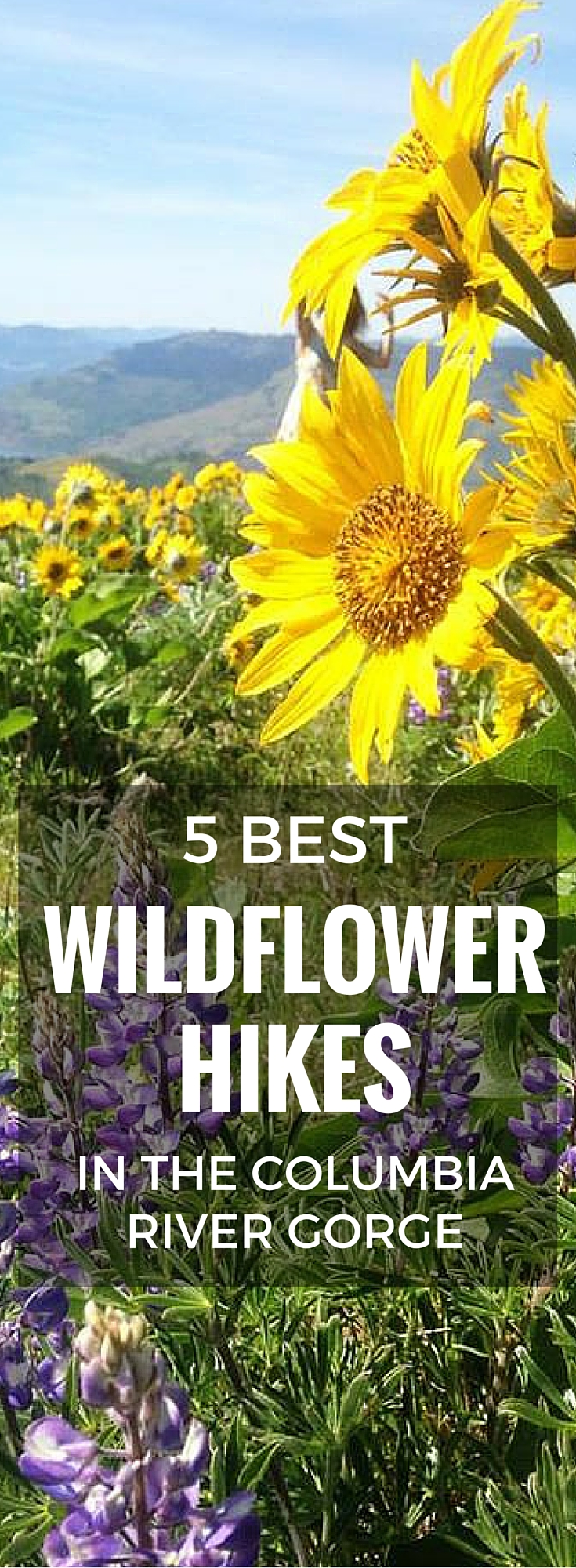 5 Best Wildflower Hikes in the Columbia River Gorge. Wildflowers start popping out in the Eastern Columbia River Gorge in the spring. Here is where to go to see some of the best displays.