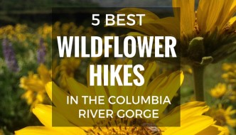 5 Best Wildflower Hikes in the Columbia River Gorge. Wildflowers start popping out on the border or Oregon & Washington in the Eastern Columbia River Gorge in the spring. Here is where to go to see some of the best displays.